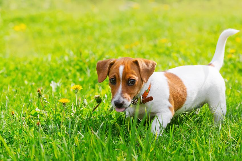 Ferienwohnung Hannweber Hund erlaubt